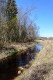 Skogflod i vår Royaltyfri Foto