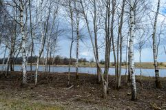 Skogflod i vår Royaltyfria Foton