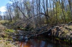 Skogflod i vår Royaltyfria Bilder