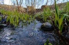 Skogflod i vår Royaltyfri Bild