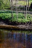 Skogflod i vår Arkivfoto