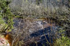 Skogflod i vår Royaltyfri Fotografi