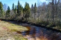 Skogflod i vår Arkivbild
