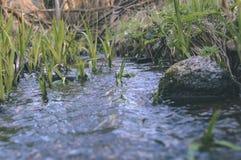 skogflod i våren - tappningfilmblick Arkivbilder