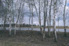 skogflod i våren - tappningfilmblick Royaltyfri Bild