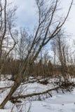 Skogflod i vinter Arkivfoton