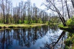 Skogflod med reflexion av träd utan sidor i vatten rockera den cesky fjädern för arvkrumlovsäsongen för att visa världen Voronezh Royaltyfri Fotografi