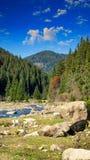 Skogflod med stenar och mossa Royaltyfria Foton