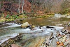 Skogflod med steniga kuster arkivfoton