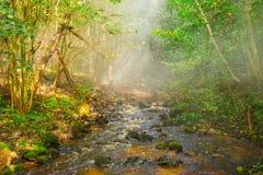 Skogflod och mist arkivfoton