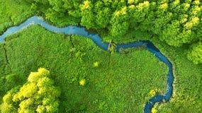 _ Skogflodbred flodmynning Härligt landskap royaltyfria foton