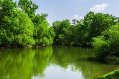 Skogfloden kan eftermiddagen soluppgång för liggandeflodfjäder Arkivbild