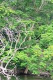 Skogflodplats Arkivfoto