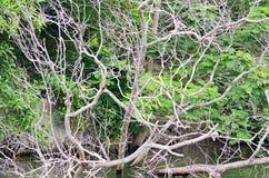 Skogflodplats Royaltyfria Foton