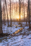 Skogflodreflexion Royaltyfri Bild