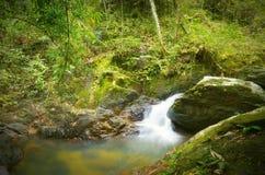 Skogfotografi, bergflod med vattenfallet Royaltyfria Foton