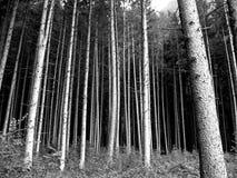 skogfrancisco saint Royaltyfri Foto