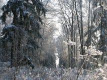 skogfrost Fotografering för Bildbyråer