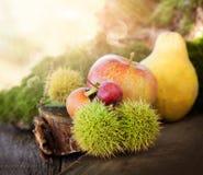 skogfrukt Royaltyfria Bilder