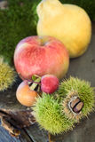skogfrukt Arkivfoton