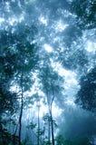 skoggåta Arkivfoton