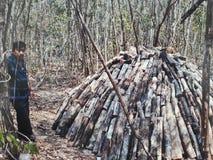 Skoggasbrännare som arbetar i sommar av den yucatan halvön producera kol royaltyfria bilder