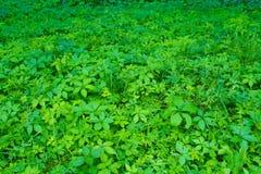 Skogglänta med olika växter fotografering för bildbyråer