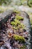 Skoggolv med torra sidor och mossa Textur naturlig bakgrund Fotografering för Bildbyråer