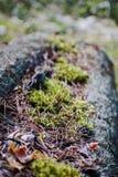 Skoggolv med torra sidor och mossa Textur naturlig bakgrund Arkivfoton