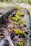 Skoggolv med torra sidor och mossa Textur naturlig bakgrund Royaltyfria Bilder