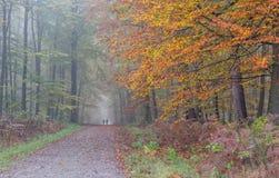 Skoggränd Royaltyfri Foto