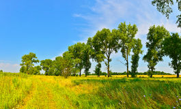 Skoggräns Royaltyfria Bilder