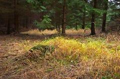 skoggräs Royaltyfri Bild