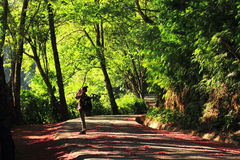 skoggreen royaltyfria foton