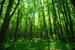 skoggreen fotografering för bildbyråer