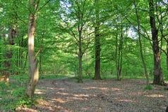 skoggreenroute Royaltyfria Bilder