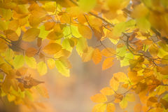 Skoghöstfärger Royaltyfria Foton