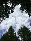 Skoghimmel Arkivfoton