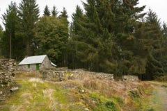skoghus fotografering för bildbyråer