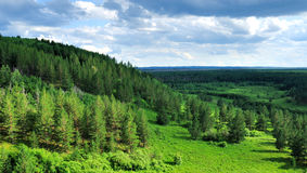 skogInner Mongolia park Royaltyfria Bilder