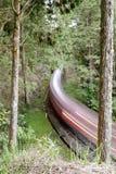 skogjärnväg Royaltyfria Bilder