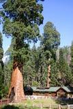 skogjättemuseum Royaltyfri Bild
