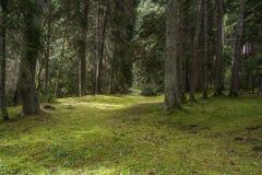 Skogjord som täckas med gras arkivfoto