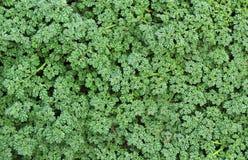 Skogjordningsväxter Arkivfoto
