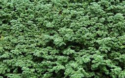 Skogjordningsväxter Arkivbilder