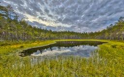 Skogkärr i torvhed på den Hokensas naturreserven royaltyfri foto