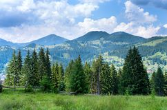 skogkant av skogen, med ett staket arkivbilder