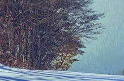 Skogkant och snö Arkivfoto
