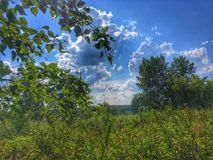 Skogkanter Royaltyfria Bilder