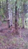 Skogklimovskimoscow natur royaltyfria bilder